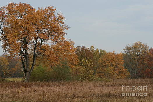 Oak in the Fall I by Christina A Pacillo