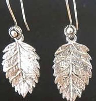 Oak Leaves by Joan  Jones