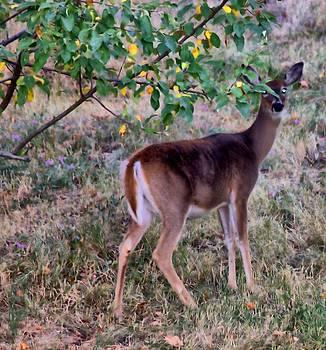 Oh Deer Me by Myrna Migala