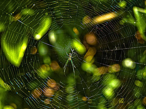 Oh The Web We Weave by Barbara Middleton