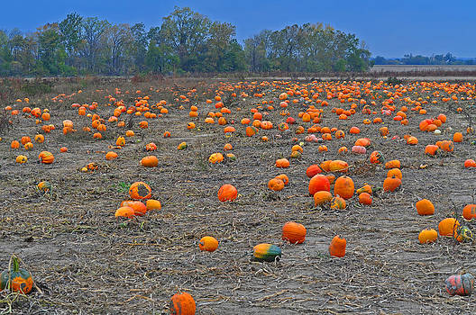 Ohio Pumpkin Patch 2 by Peter  McIntosh