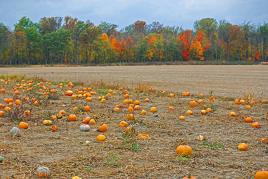 Ohio Pumpkin Patch by Peter  McIntosh