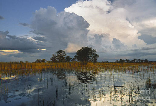 Sandra Bronstein - Okavango Delta Evening