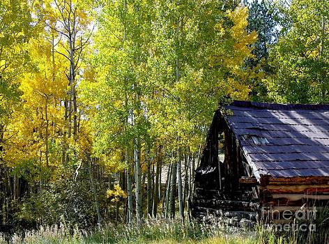 Old Cabin in the Golden Aspens by Donna Parlow