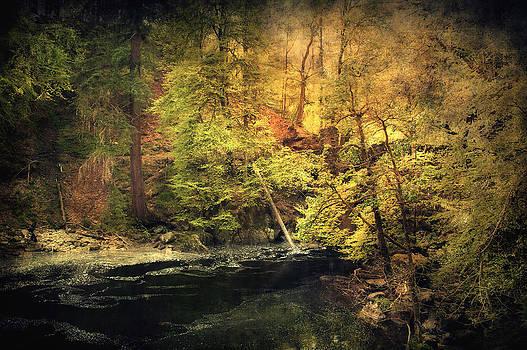 Svetlana Sewell - Old Forest