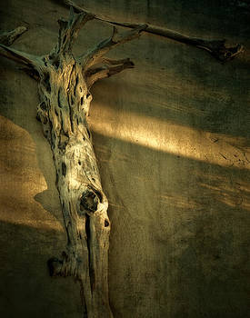 Mario Celzner - Old Tree in Sand