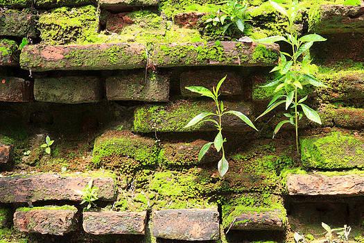 old wall at heritage world Phra Nakhon Si Ayutthaya park by Wasan Gredpree