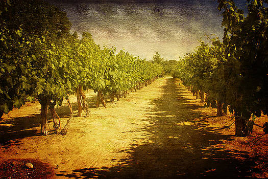Old World Vineyard by Terry Hollensworth-Rutledge