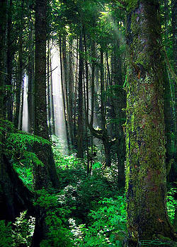 Olympic Forest by Ric Soulen