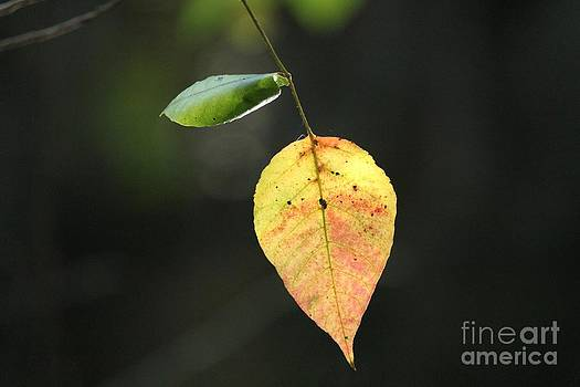 One Leaf by Theresa Willingham