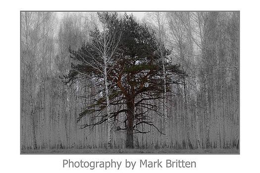 One by Mark Britten