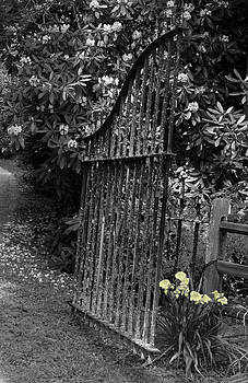 Open Gate by Lindy Brown