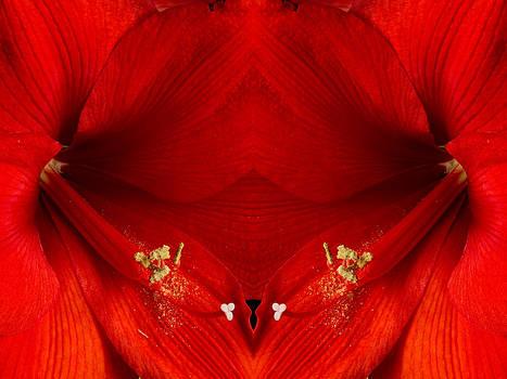 James BO  Insogna - Orange Amaryllis Hippeastrum Close-Up Double