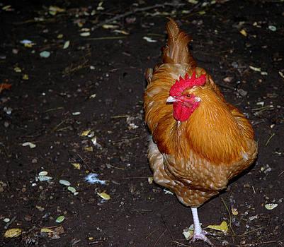 LeeAnn McLaneGoetz McLaneGoetzStudioLLCcom - Orange Chicken