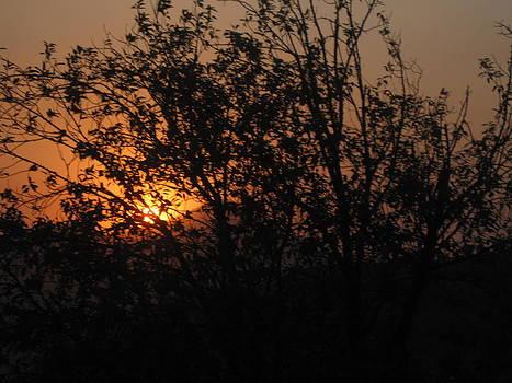 Orange Delight by Manesh Kumar