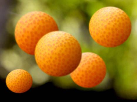 Orange Dream by Phachesnie Studio