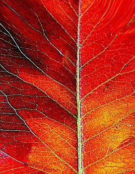 Orange In Autumn.... by Tanya Tanski
