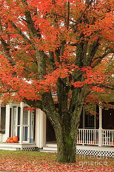 Deborah Benoit - Orange Leaves and Pumpkins