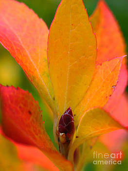 Juergen Roth - Orange Leaves