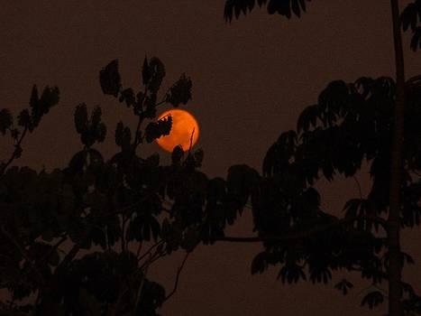 Xafira Mendonsa - Orange Moon