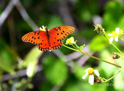 Orange on the Wing by Theresa Willingham