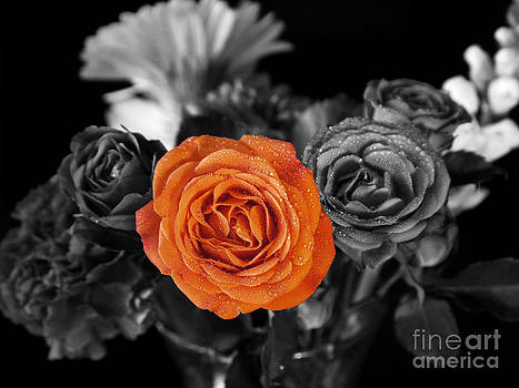 Orange Rose by Nancie DeMellia
