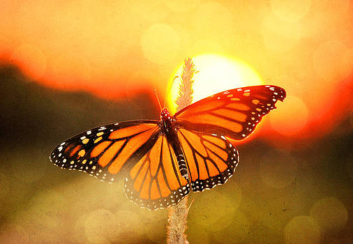 Emily Stauring - Orange Sunset