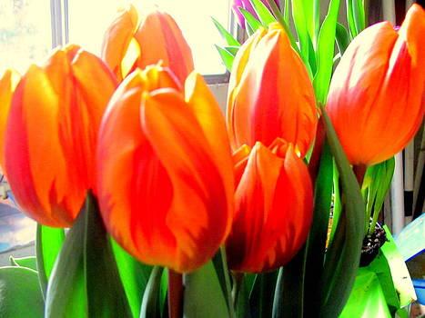 Orange Tulips in Sunshine by Amy Bradley