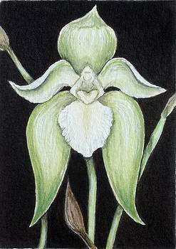Orchid Angel by Debrah Nelson