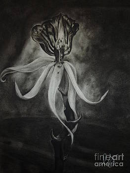 Estephy Sabin Figueroa - Orchid in Black-and-White