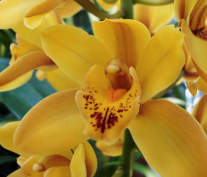 Orchid by Kathleen Holley