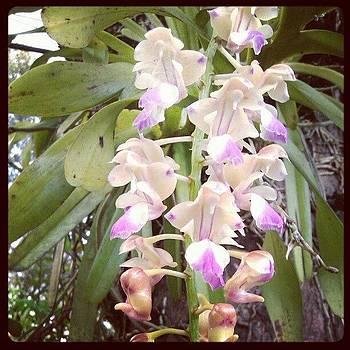 Orchid by Nawarat Namphon