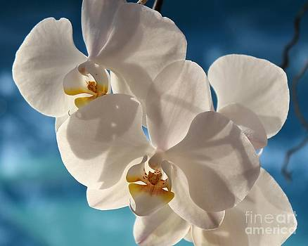 Orchids by Pool by Theresa Willingham