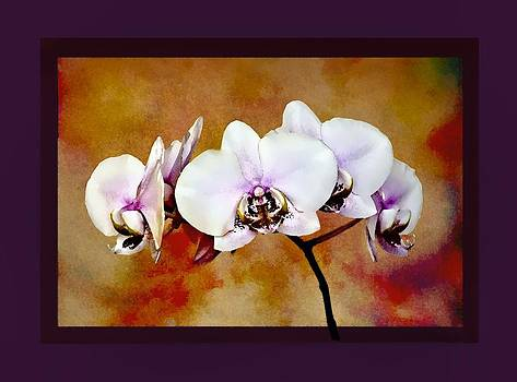 Orchids by Mary Morawska