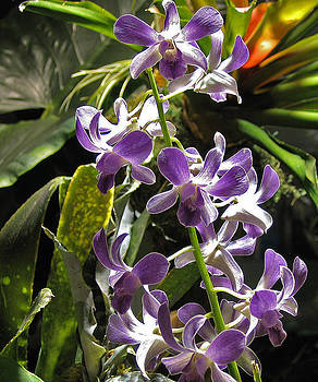 Orchids by Stephen Janko