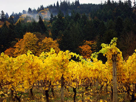 Glenna McRae - Oregon Autumn Vineyards