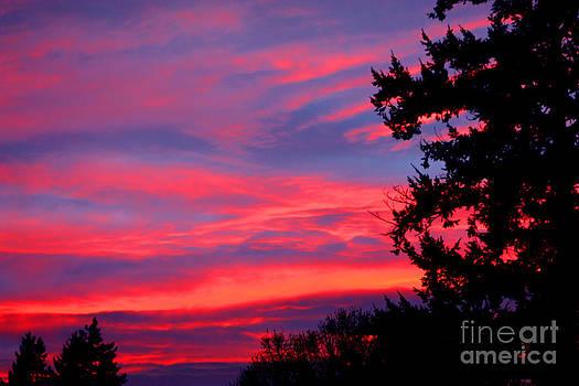Nick Gustafson - Oregon Skies