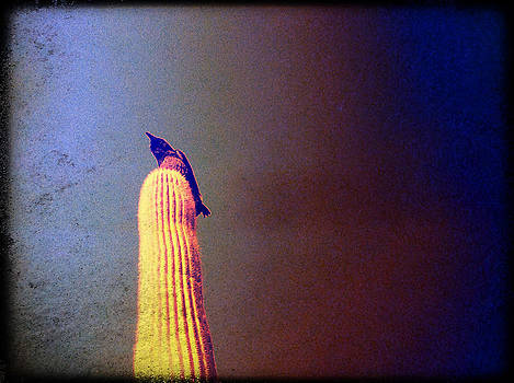 Organ Pipe by Betsey Walker Culliton