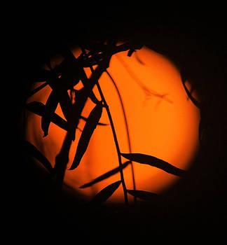 Organic Ball of Street Light by Edgar  Mena