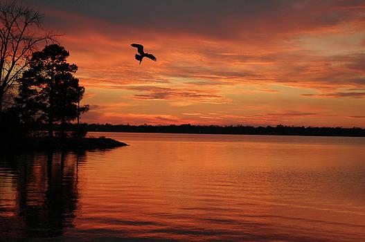 Osprey In Flight by Donnie Smith