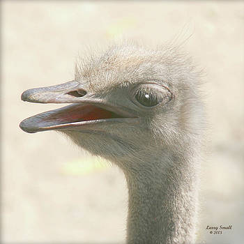 Ostrich by Larry Small