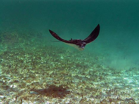 Li Newton - Out of the Deep