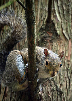 Out On A Limb by Sandi OReilly