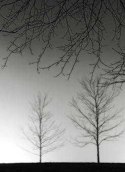 Outstretched Limbs by Rod Kaye