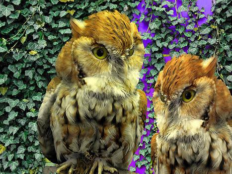Owl Look by Lynda Lehmann