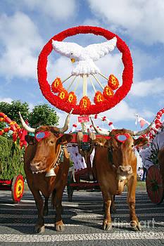 Gaspar Avila - Oxen cart