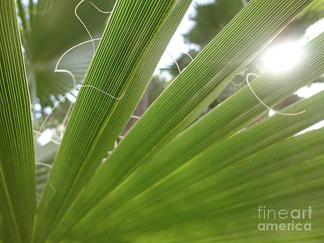 Palm leaf by Claudia Burlager