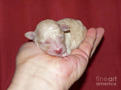 Palm Pup by Joy Tudor