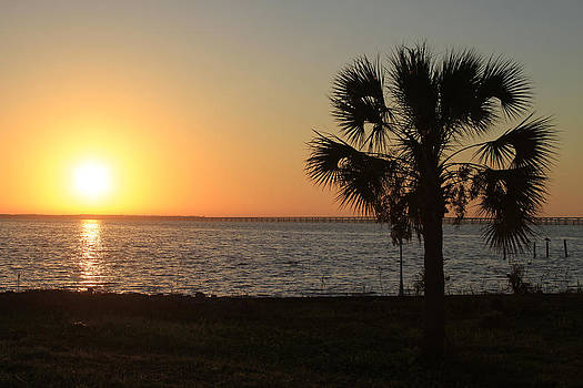 Palm Sunrise by Lindy Brown