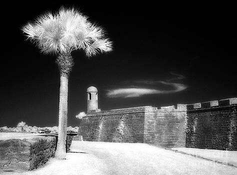 Jeff Holbrook - Palm Tree and Castillo